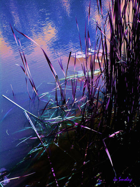 Photograph - Pond Reeds At Sunset by Joanne Smoley