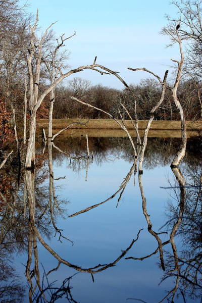Photograph - Pond Reflection  by Sheila Brown