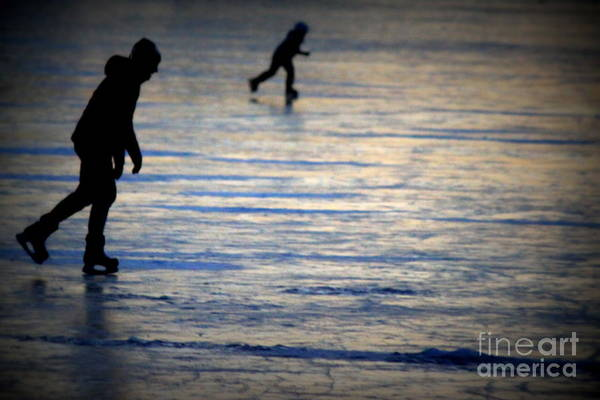 Wall Art - Photograph - Pond Skate by Hanni Stoklosa
