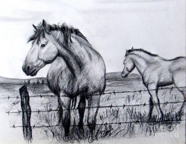 Drawing - Ponder Texas Horses by Georgia's Art Brush