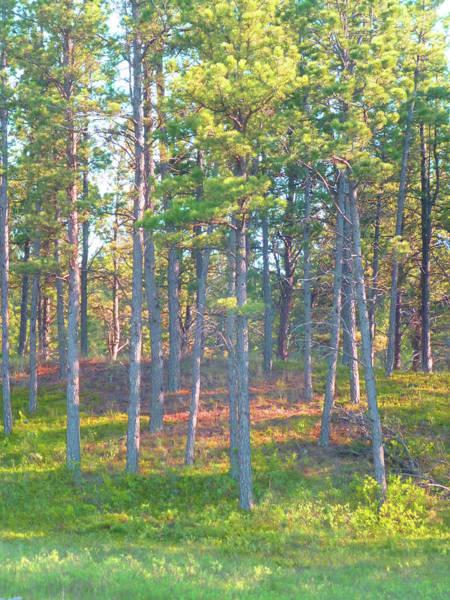 Photograph - Ponderosa Pines by Cris Fulton