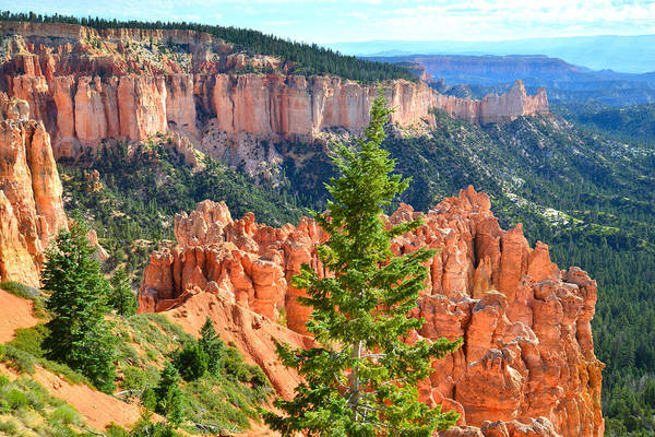 Photograph - Ponderosa Point by Ray Mathis