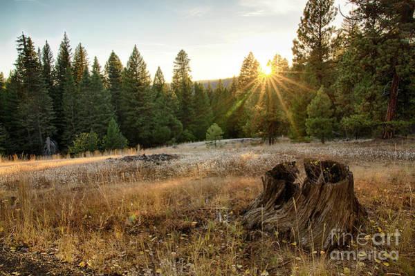 Wall Art - Photograph - Ponderosa Sunset by Idaho Scenic Images Linda Lantzy