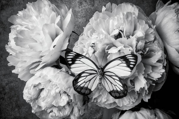 Photograph - Ponies With Exotic Butterfly In Black And White by Garry Gay