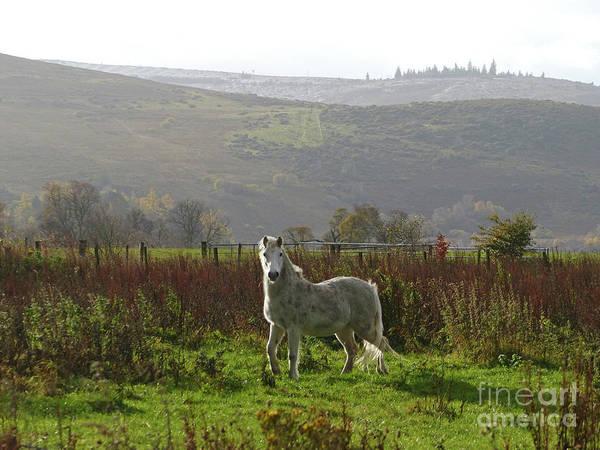 Photograph - Pony - Drumin - Glenlivet by Phil Banks