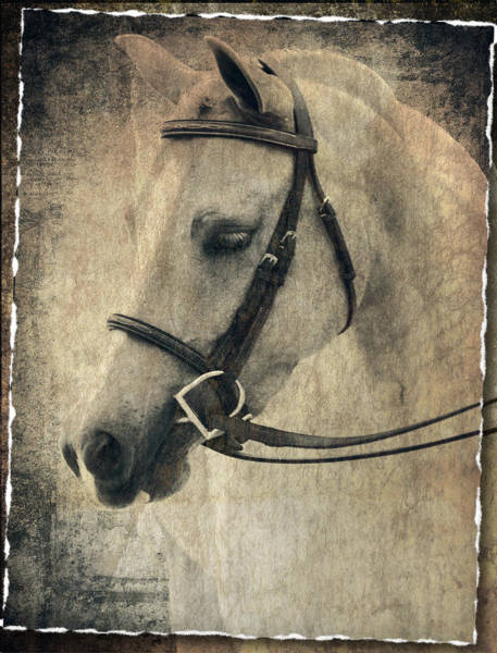 Photograph - Pony In Snaffle by Alice Gipson