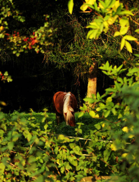Photograph - Pony In Sun-dappled Meadow by Sarah Broadmeadow-Thomas
