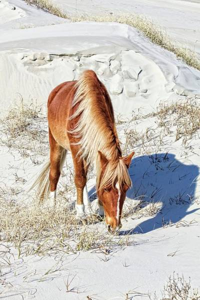 Photograph - Pony In The Dunes by Alice Gipson
