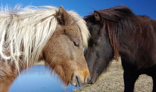 Photograph - Pony Love by Amanda Smith