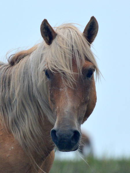 Photograph - Pony Portrait by Dan Williams