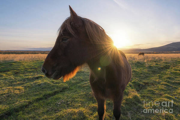Wall Art - Photograph - Pony Profile  by Michael Ver Sprill