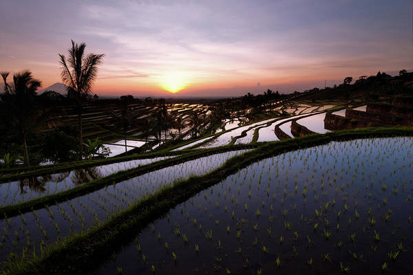 Photograph - Pools Of Rice by Andrew Kumler