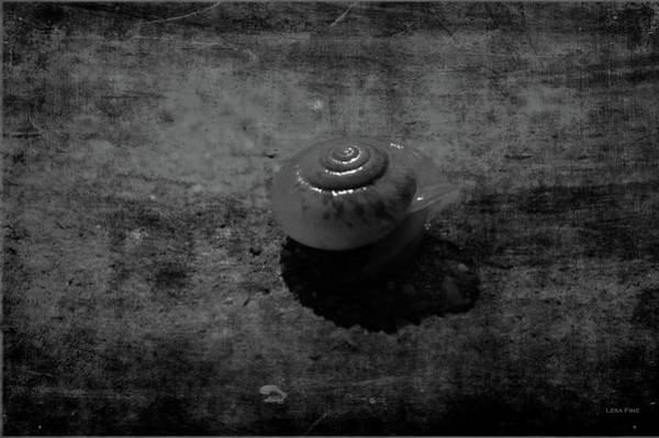 Photograph - Poolside Snail Bw by Lesa Fine
