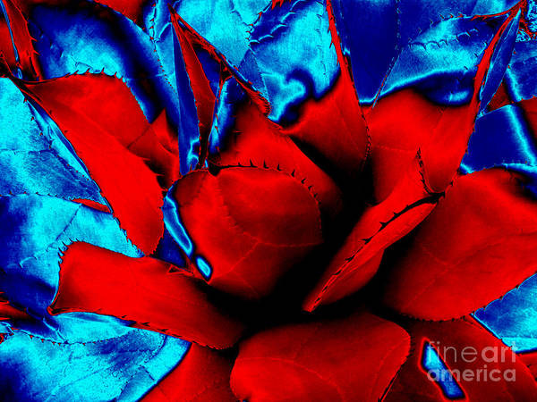 Photograph - Pop Art Succulent Cactus Abstract In Red And Blue by Rose Santuci-Sofranko