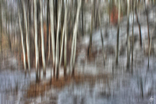 Photograph - Poplar Cluster In The Wind by Wayne King