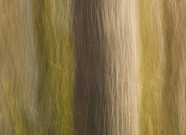 Photograph - Poplar by Margaret Denny