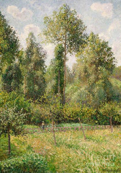 Wall Art - Painting - Poplars, Eragny, 1895 by Camille Pissarro