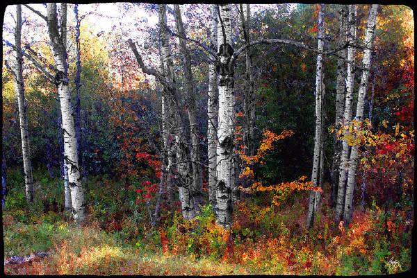 Photograph - Poplars Under Glass by Wayne King
