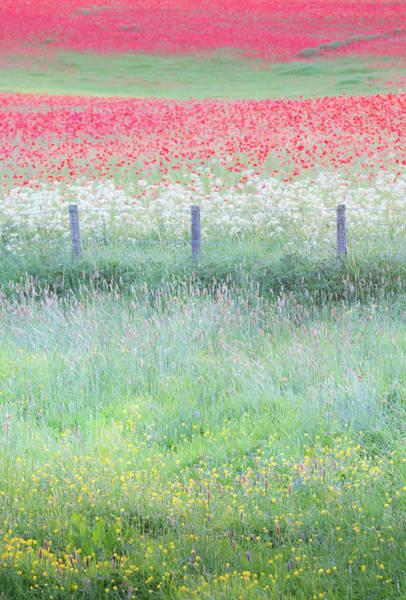 Wall Art - Photograph - Poppies And Buttercups, Wild Flower English Meadow by Anita Nicholson