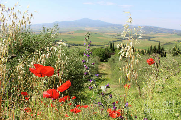 Wall Art - Photograph - Poppies And Other Wildflowers In The Val D'orcia With Mount Amia by Adam Long