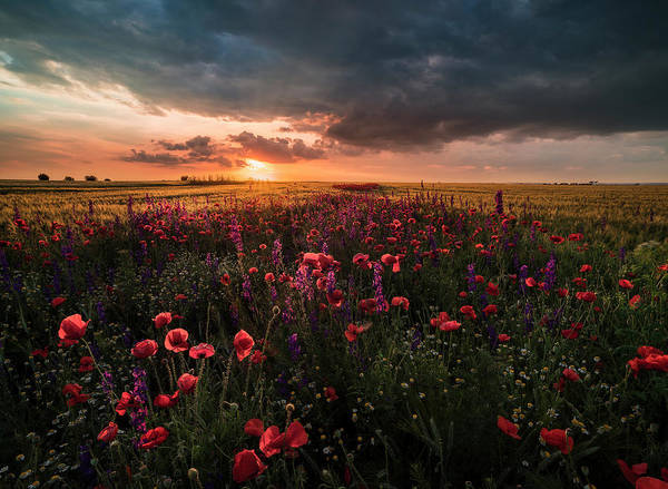 Wall Art - Photograph - Poppies At Sunset 1 by Adrian Malanca