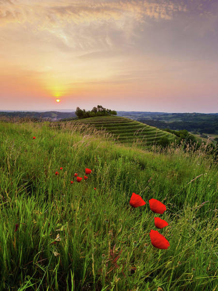 Photograph - Poppies Burns by Davor Zerjav