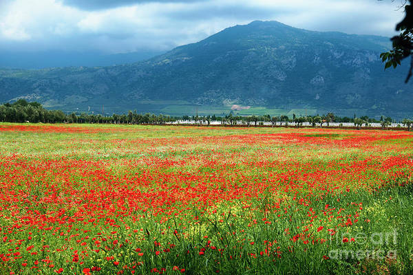 Wall Art - Photograph - Poppies Filled Meadow by George Oze