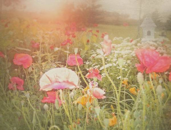Photograph - Poppies In The Light by Mary Wolf