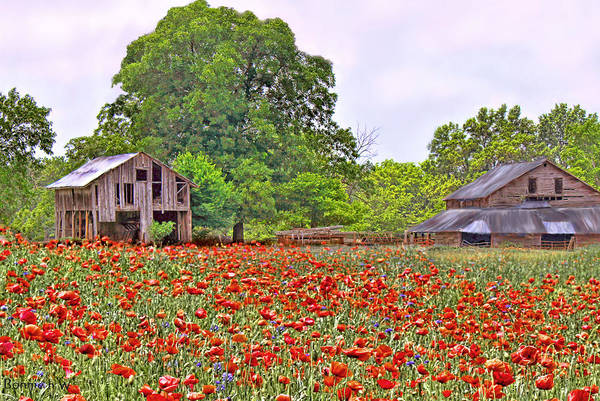 Photograph - Poppies On The Farm by Bonnie Willis