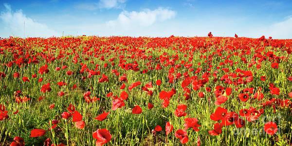 Photograph - Poppies by Scott Kemper