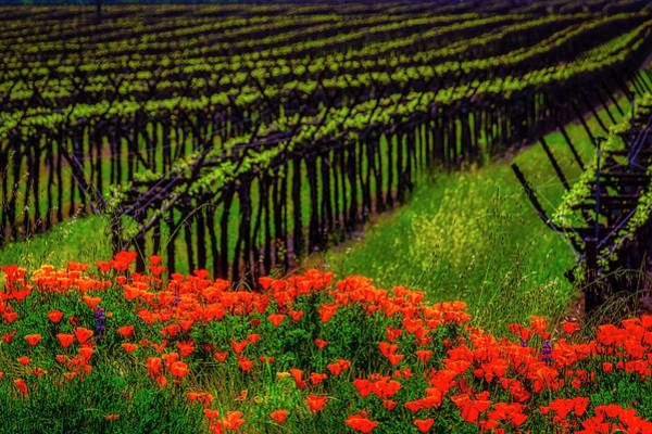 Wall Art - Photograph - Poppies Spring Vineyards by Garry Gay