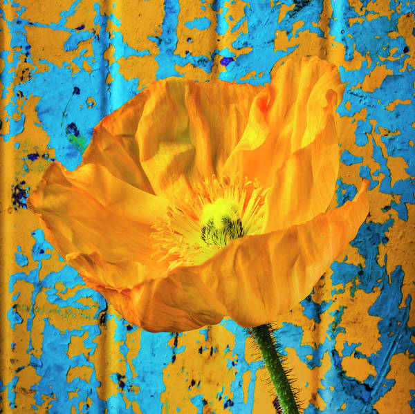 Wall Art - Photograph - Poppy Against Rusty Wall by Garry Gay