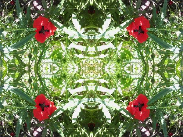 Photograph - Poppy And Light Foliage Mandala by Julia Woodman