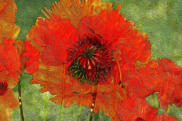 Wild Poppies Digital Art - Poppy Field 14 by Lynda Lehmann