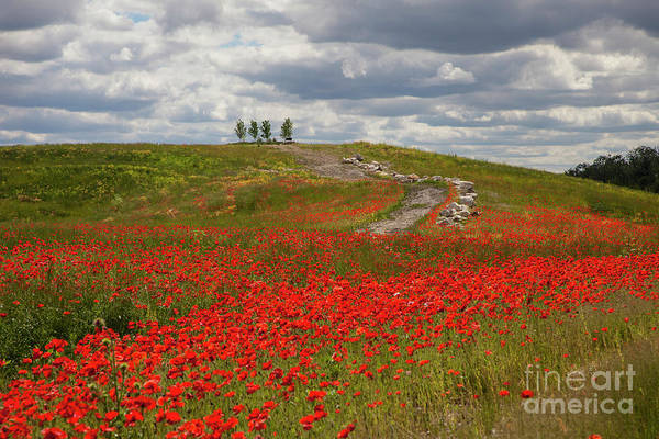 Photograph - Poppy Field 2 by Timothy Johnson