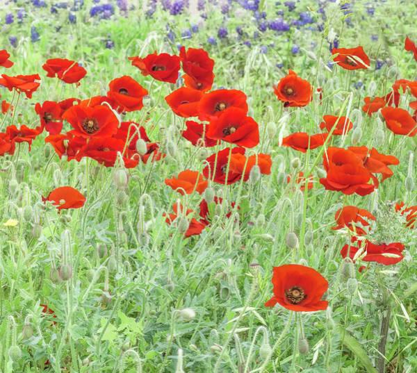 Photograph - Poppy Field by Usha Peddamatham