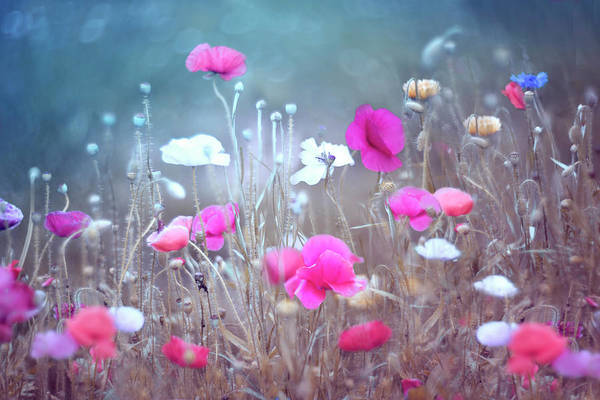 Wall Art - Photograph - Poppy Garden by Magda Bognar
