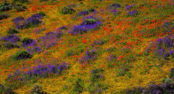 California Poppy Photograph - Poppy Landscape by Garry Gay