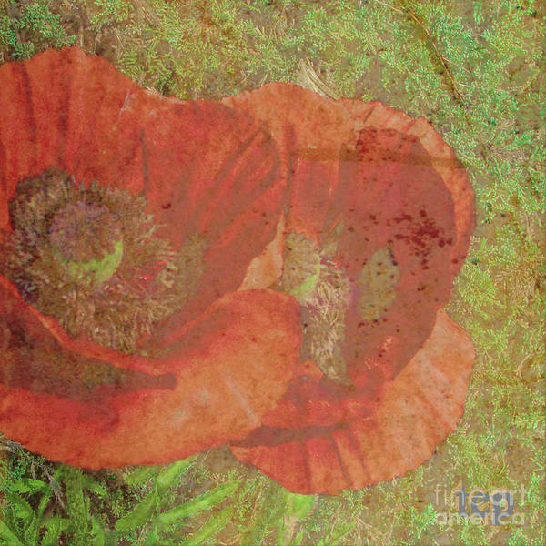 Photograph - Poppy Love by Traci Cottingham