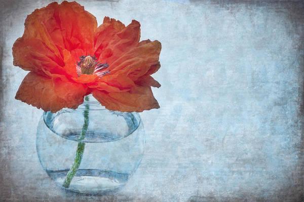 Blue Vase Photograph - Poppy by Marion Galt