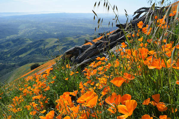 Art Print featuring the photograph Poppy Mountain  by Kyle Hanson