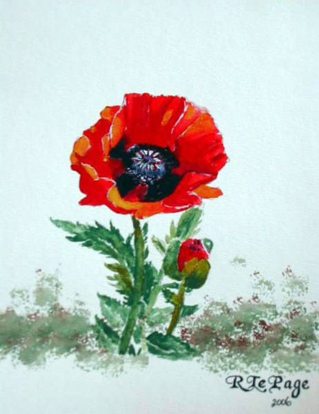 Painting - Poppy by Richard Le Page