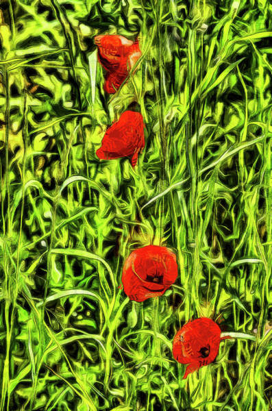 Wall Art - Photograph - Poppys Van Gogh Art by David Pyatt
