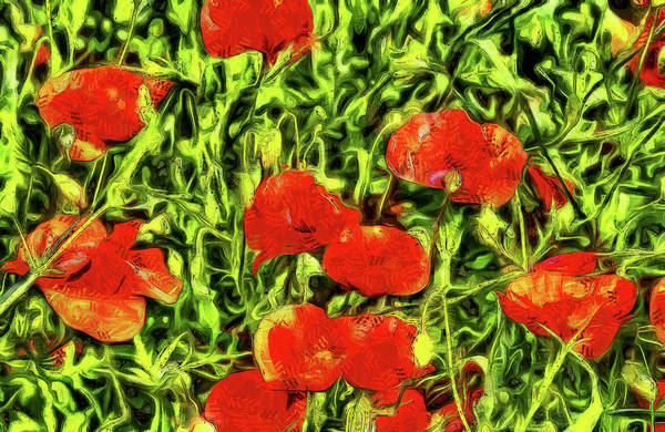 Wall Art - Photograph - Poppys Van Gogh by David Pyatt