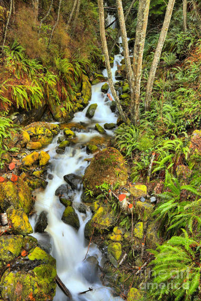 Photograph - Port Alice Wilderness Waterfall by Adam Jewell