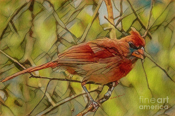 Painting - Port Orange Cardinal by Deborah Benoit