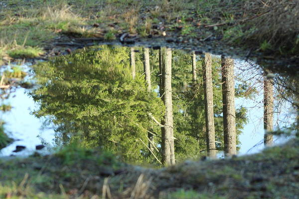 Photograph - Portal In A Puddle by Sherri Keene