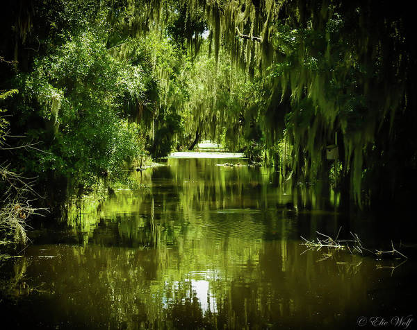 Alligator Alley Photograph - Portal Of The Surreal by Elie Wolf