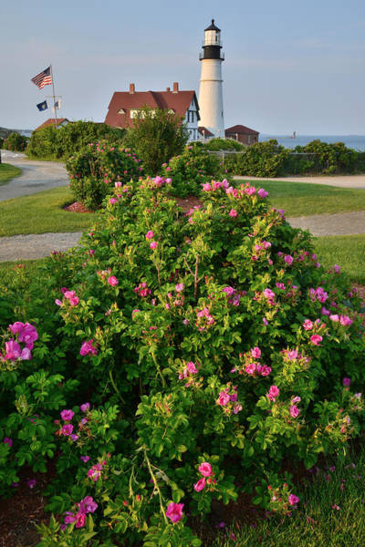 Photograph - Portland Head Lighthouse by Ray Mathis