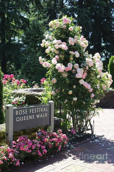 Photograph - Portland Rose Garden With Sign by Carol Groenen
